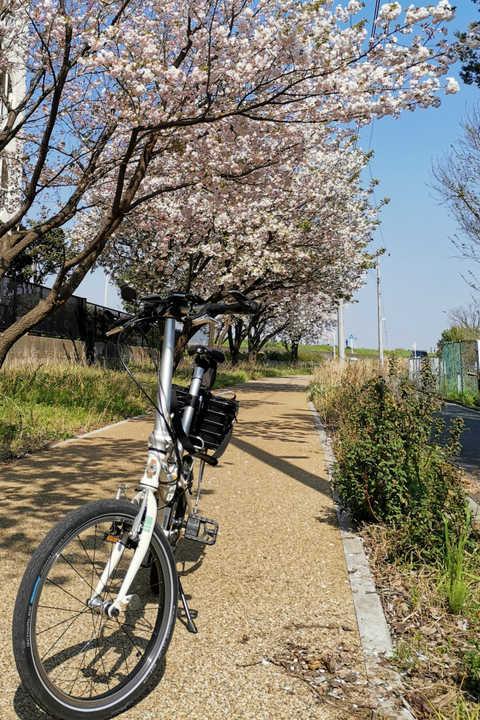 桜が咲いている道と自転車の写真