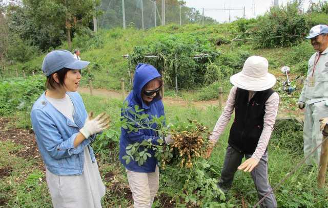 家庭菜園での収穫の写真